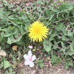 春の草花から、元気で前向きなメッセージをもらったよ♪